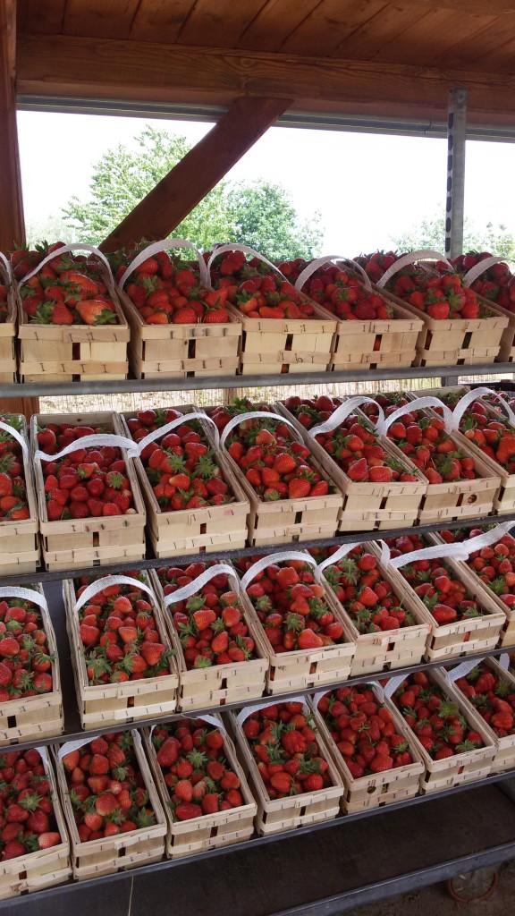 Čerstvé jahody na Vás čekají...